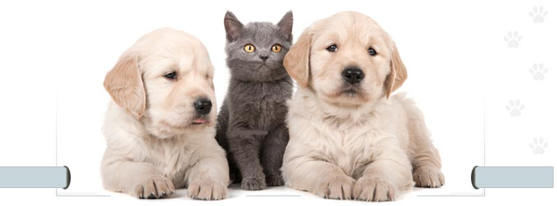 Dogs & Cat Img